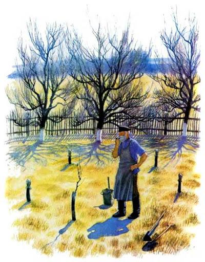 История одной яблоньки   Изображение - 1