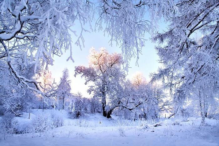 Чародейкою Зимою околдован лес стоит | Изображение - 1