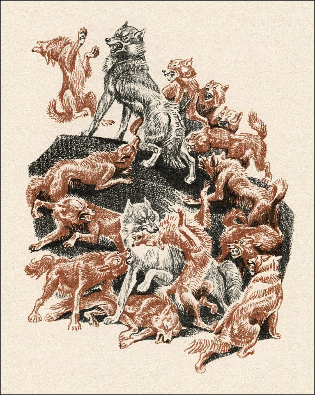 Рыжие собаки | Изображение - 1