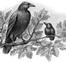 Галка и вороны | Изображение - 1