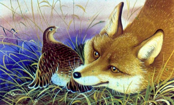 Лиса и куропатка | Изображение - 2