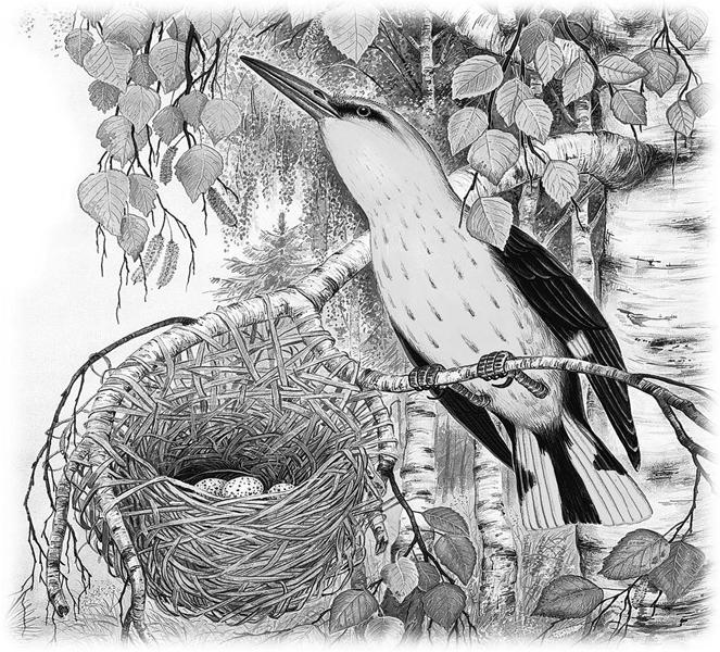 Лесные домишки картинка к рассказу
