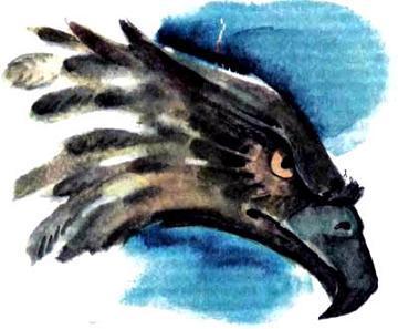 орел Карфакс