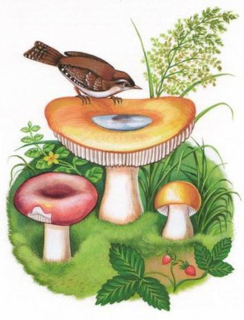 Старый гриб, Рассказ