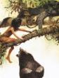 Как в джунгли пришёл страх, Сказка