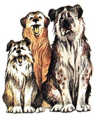 Три собаки, Сказка