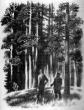 Лесовик, Рассказ