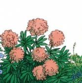 Розовые цветы, Сказка