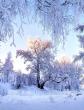 Чародейкою Зимою околдован лес стоит