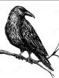 Ворона и ворон, Басня