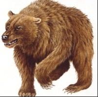 Сказка Медведь, Борис Житков