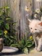 Кот и воробей, Басня