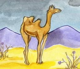 Верблюды, Стих