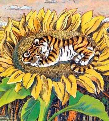 Про тигрёнка на подсолнухе, Сказка