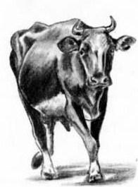 Черная корова, Сказка