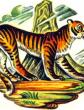 Человек и тигр