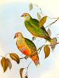 Неправый суд птиц
