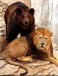 Лев и медведь