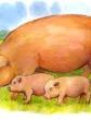Свинья, Рассказ