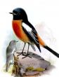 Птичка, Стих