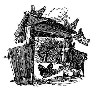 Яичко курицы во дворе