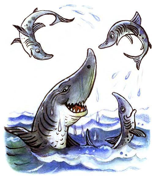 доктор Айболит акулы здоровы радуются