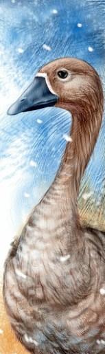 Чудесное путешествие Нильса с дикими гусями | Изображение - 10