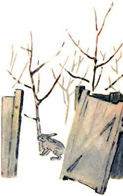 заяц грызет кору