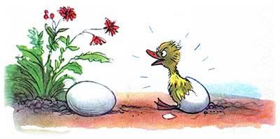 Цыплёнок и утёнок сказка