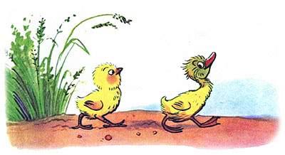 сказка про цыплёнка и утёнка