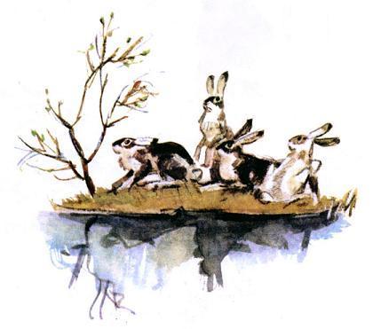 зайцы на острове