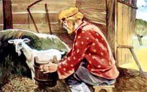 Иван-бедняк стал доить. Течет молоко, золота нет как нет
