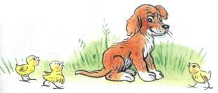 щенок цыплята на траве