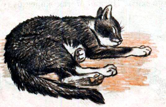 Кот с бубенцом