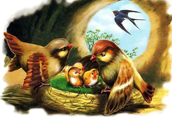 птицы у гнезда