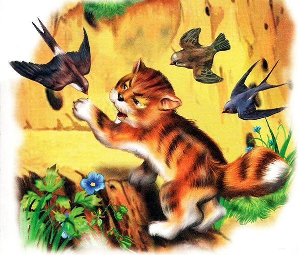 кот и птицы