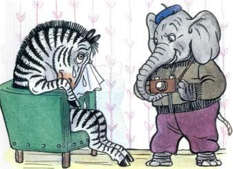 зебра плачет в кресле слон фотограф с фотоаппаратом