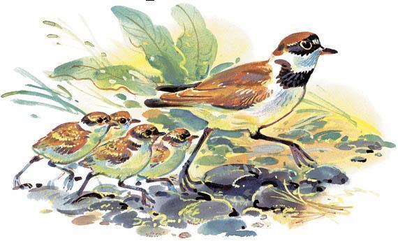 мама и птенцы