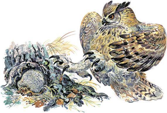 филин сова и еж