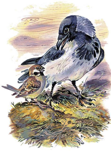 ворона и воробей птицы