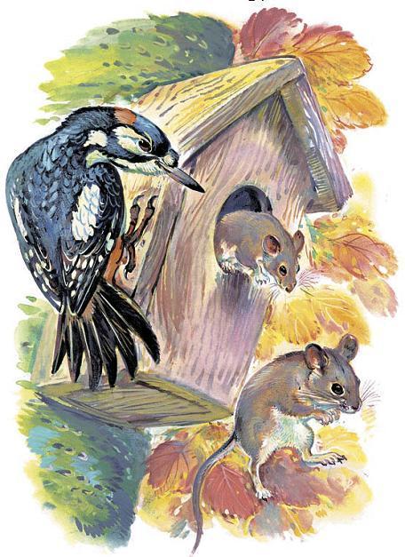 дятел и мышата в скворечнике