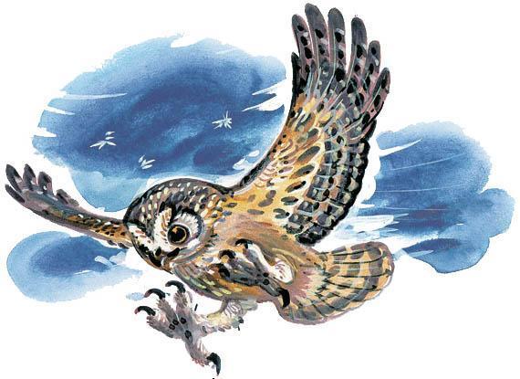 филин и сова атакует планирует вниз