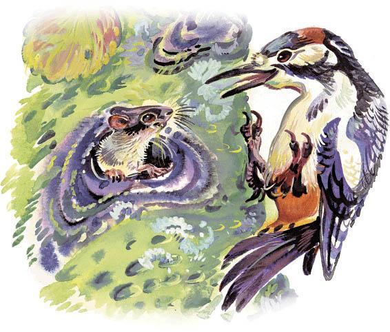 дятел и мышь
