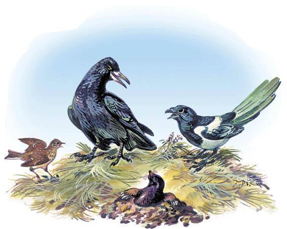 птицы ворона и сорока и крот