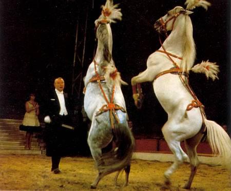 Номер с дрессированными лошадьми обычно бывает гвоздем каждого циркового представления.