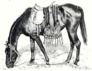 Арабский скакун, родоначальник многих пород.