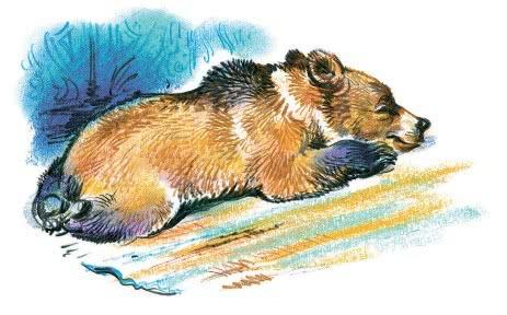 алёнушкины сказки медведко
