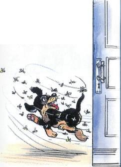 щенок, собака, пес, пчелы, атака, жалят