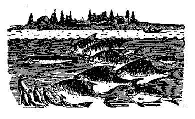 щука и рыбы