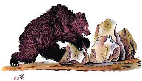 медведь ворочает камни